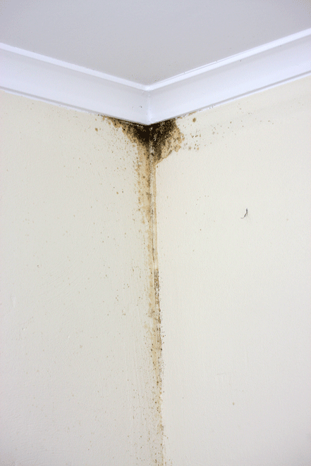 Mold Damage Tucson Contractor